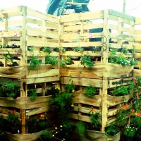 Ideas and Inspiration for a Modern Vegetable Garden