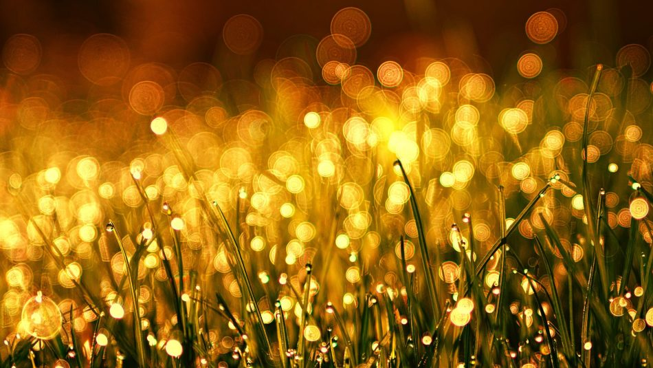 Golden grass in the sun