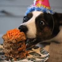 Vegan verjaardagstaart voor honden