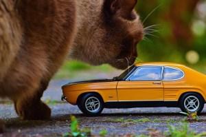 cat-790633_1280