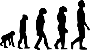 evolution-297234_1280