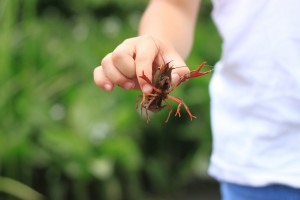 crayfish-368054_1280