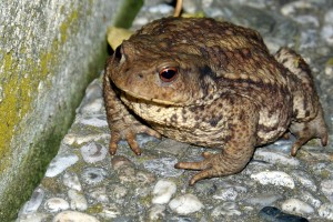toad-405121_1280
