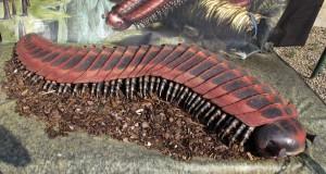 Giardino_dei_semplici,_mostra_dinosauri,_arthropleura_armata