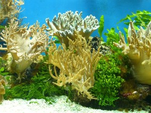 aquarium-53993_640