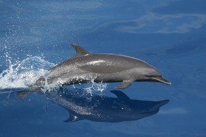 dolphin-79848_640