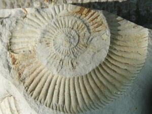 fossils-384823_640