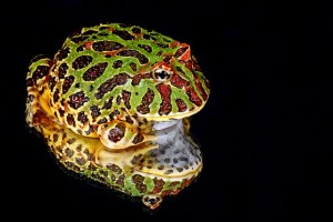 frog-164382_640
