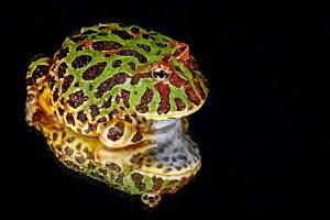 frog-164382_640