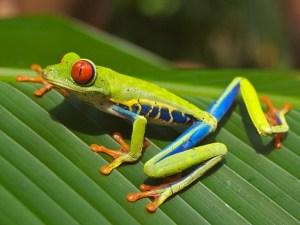 frog-643480_640