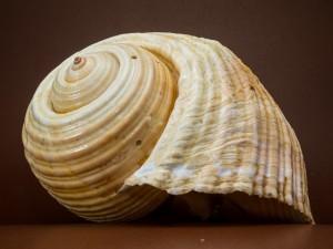 shell-199712_640