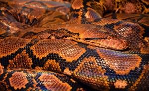 snake-771541_640