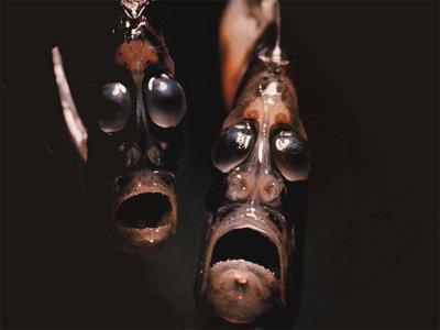民族的な深海生物