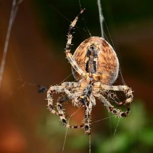 spider-695009_640