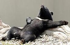 動物 冬眠 する