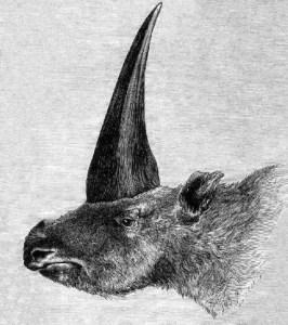 Elasmotherium_1878