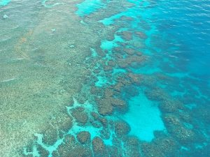 great-barrier-reef-261727_640