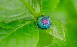 snail-1335473_640