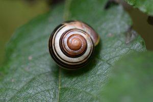 snail-950181_640