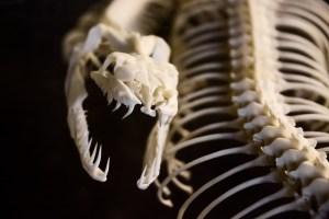 anatomy-20758_640