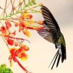 ハチドリが日本に生息!?世界最小の美しい鳥が「ガ」に似てるという件