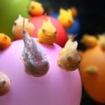 ダンゴウオ(フウセンウオ)が可愛いぞ!!飼い方や販売価格、採集場所は?
