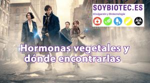 """Imagen destacada del post """"Hormonas vegetales y dónde encontrarlas"""""""