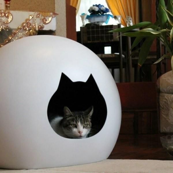 cueva gato