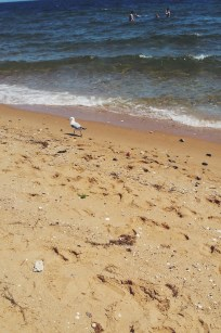 A small sea bird walking away from the camera along the shore