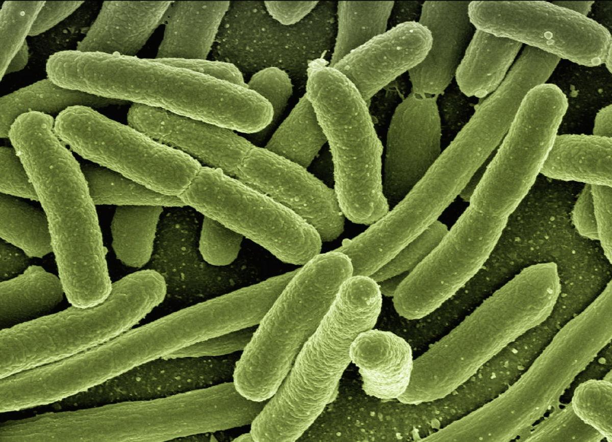 Tips para combatir las bacterias en tu fibra de lavar trastes