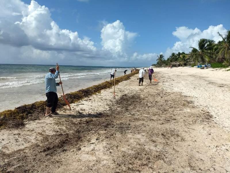 La SEMAR anuncia plan para combatir el sargazo en el Caribe