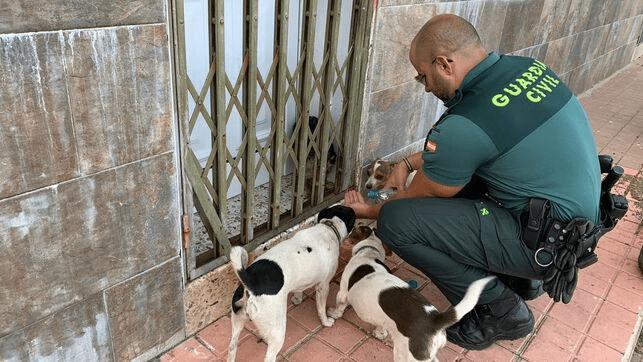 Video | Rescataron a un perro deshidratado en el incendio de Gran Canaria