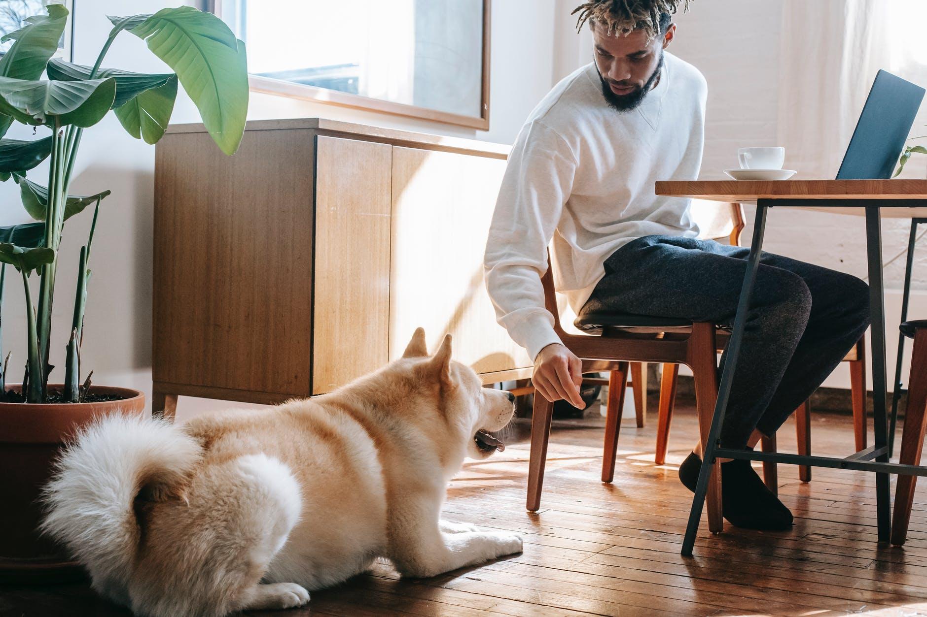 Cómo aumentar los años de vida de tu perro