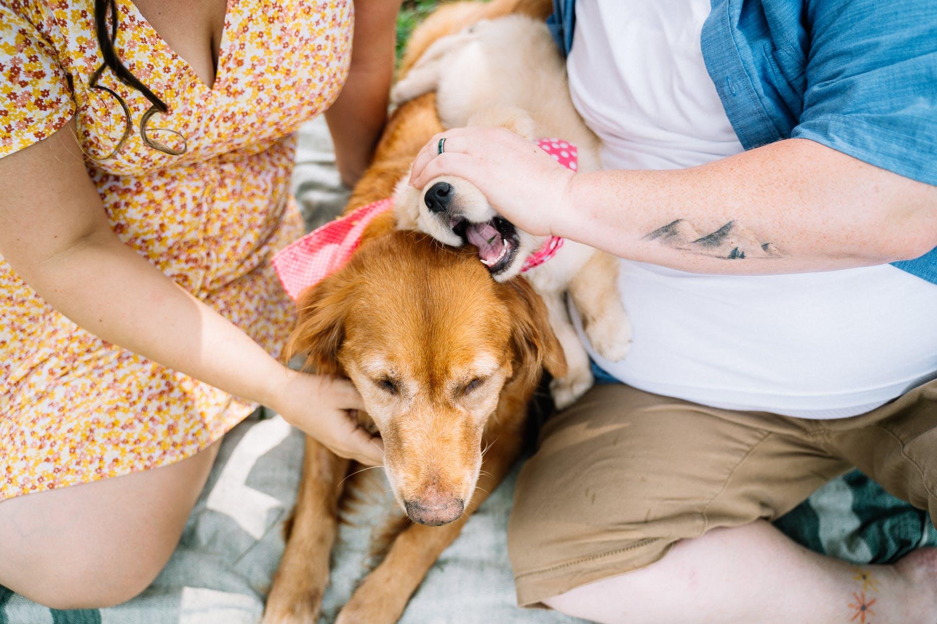 Tener una mascota canina puede ayudar a la prevención del asma