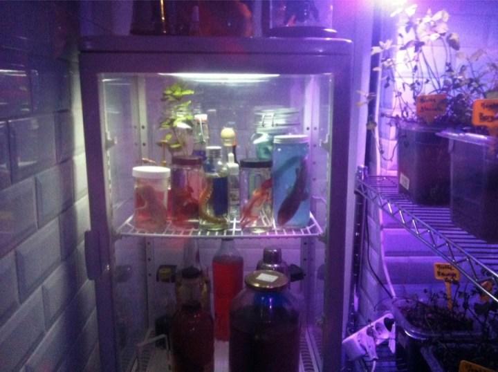 Mojito Lab Deco