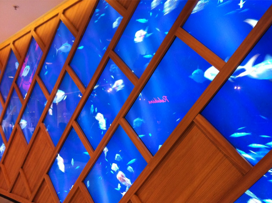 Aquarium Numérique So Ouest