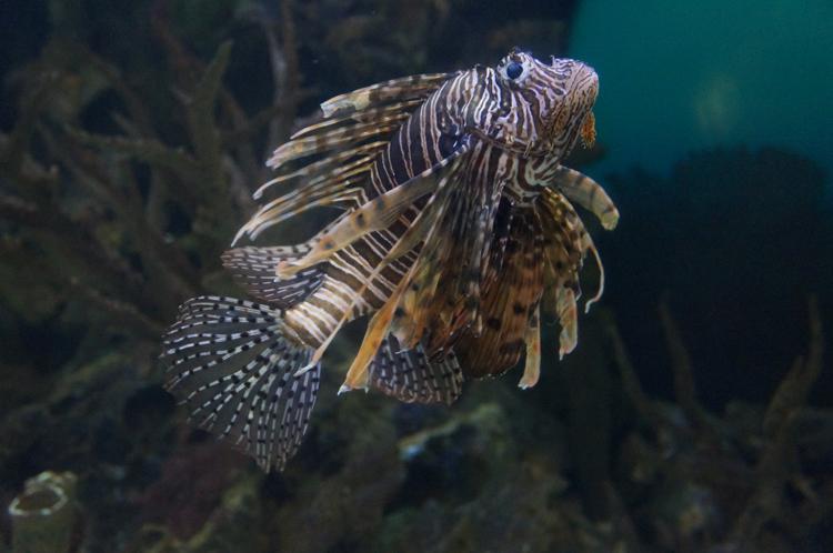 Vegas LV Shark Reef Mandalay Bay