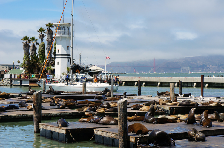 SF Fisherman's Wharf & Peer 39