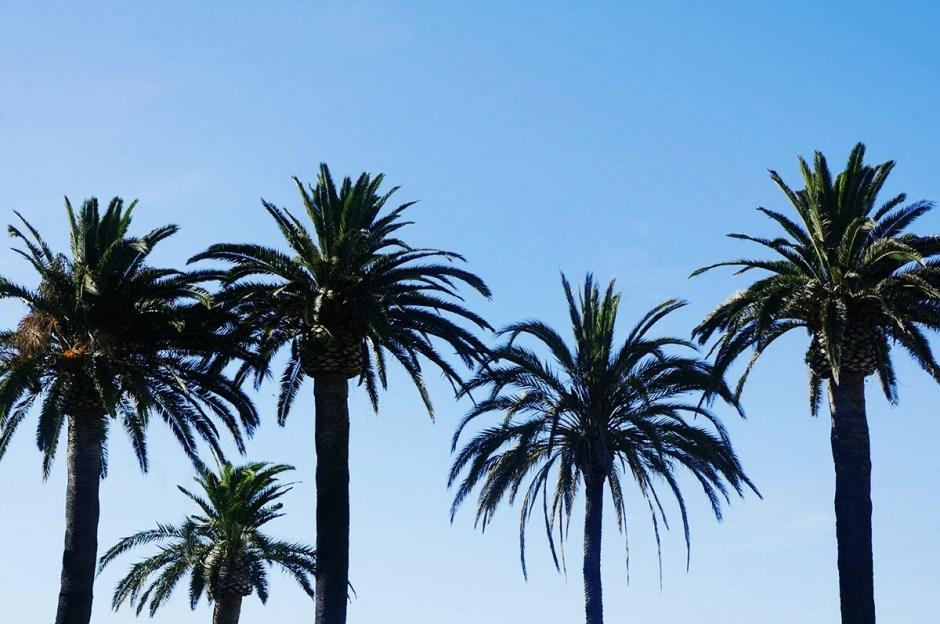 corse ile rousse vacances 2016 palmiers