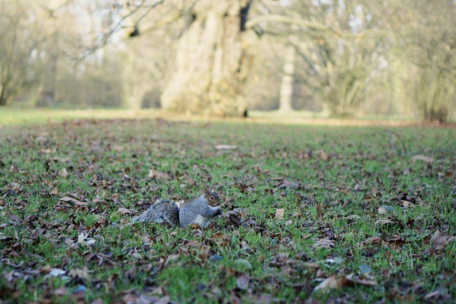 Kew Garden London Jardin botanique londres avis visite hiver Ecureuil