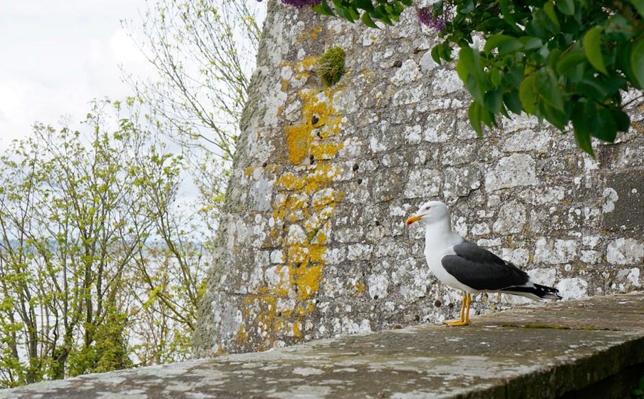 Mont Saint Michel grande maree mere poulard avis sejour abbaye visite 8