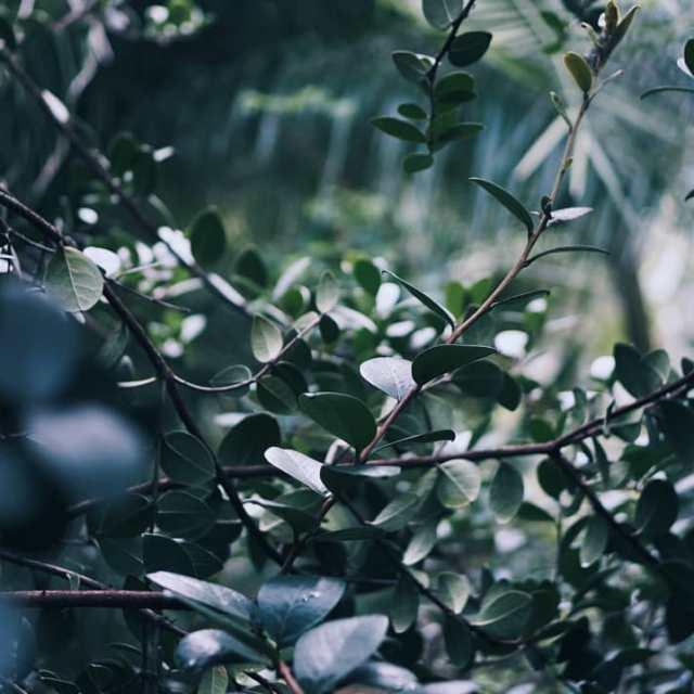 x2618xfe0f GREEN MOOD x2618xfe0f Petit souvenir visuel du jardin botaniquehellip