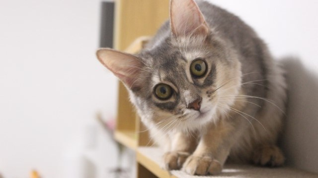 不思議そうな猫