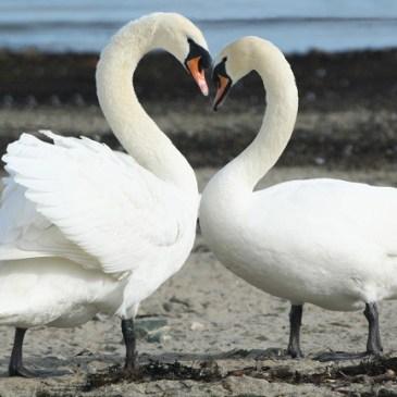 Las relaciones de pareja