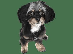 犬(ミックス犬)