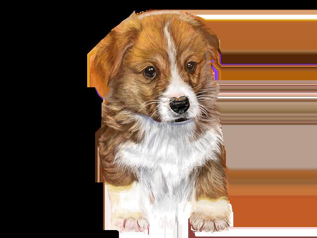 犬(コーギー)
