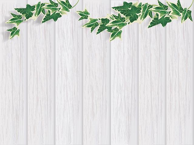 白い板壁とアイビー