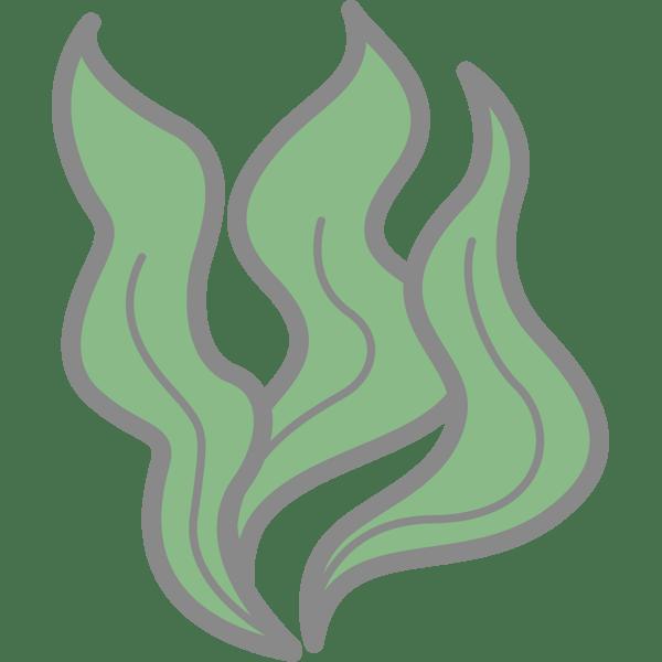 食品 わかめ(海藻)(カラー)
