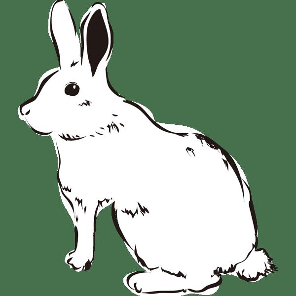 動物 兎(うさぎ)(モノクロ)