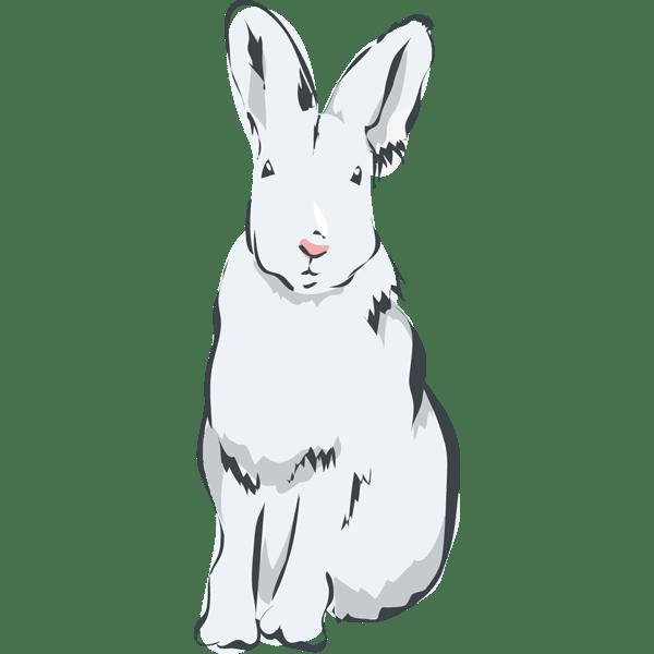 動物 兎(うさぎ)(カラー)